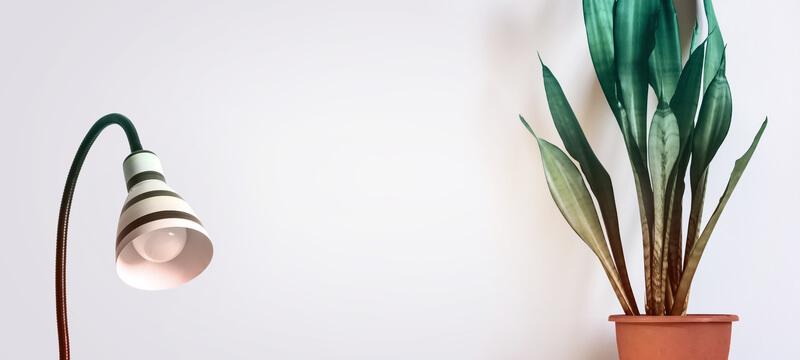 plant cadeau doen